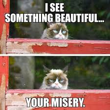 Angry Meme Cat - grumpy cat meme grumpy cat pictures and angry cat meme