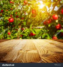 autumn apple orchard background stock photo 319452119 shutterstock