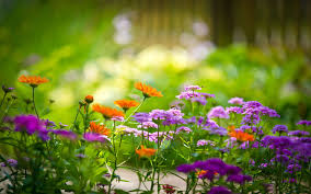 natural flowers wallpapers