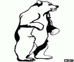 bears coloring pages printable games