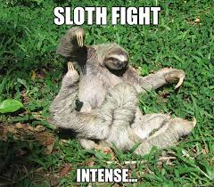 Angry Sloth Meme - sloth fight memes quickmeme