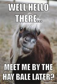 Funny Hello Meme - 25 very funny horse meme photos and pictures