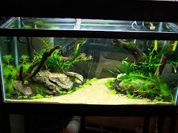 fish tank decorations house design and office fish tank ideas