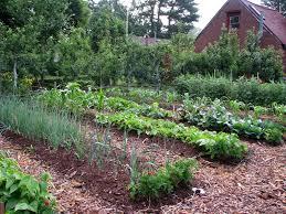 best vegetable garden layout choosing vegetable garden mulch