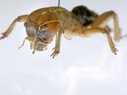 climate change animals struggle for survival in california desert
