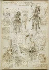 Anatomy Of A Foot The Anatomy Of A Foot Artist Leonardo Da Vinci Completion Date
