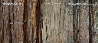 artstation cypress bark substance material sekula
