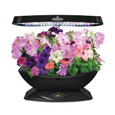 Indoor Herb Garden Kits Miracle Gro Aerogarden Classic 7 Led With Gourmet Herb Seed Pod