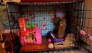 Rabbit Hutch Set Up Free Ranging Rabbits Bunnies At Home
