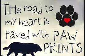 I Love My Dog Quotes Pleasing Love Quotes I Love My Dog