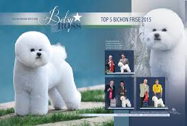 bichon frise kennels betsy ross in showsight and dog news bichon frise club of san diego
