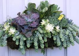 succulent arrangements 124 best wedding succulent table arrangements images on