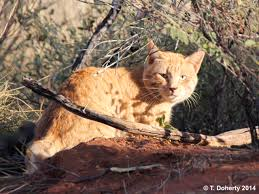 native plants wa are needed to protect native species from feral cats