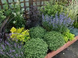 Low Maintenance Backyard Ideas Low Maintenance Backyard Plants