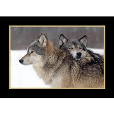wildlife christmas cards animal christmas cards at shopnwf org