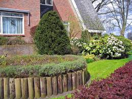 the netherlands ornamental plants at the house in the city of