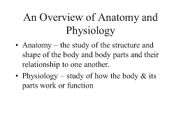 Human Anatomy And Physiology Notes Human Body Notes Ppt Download