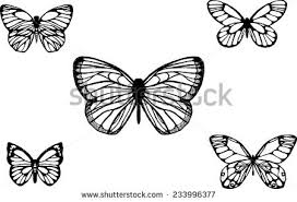butterfly line drawing free vector stock graphics