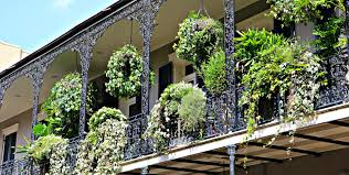 french quarter homes and condos with balconies bloom