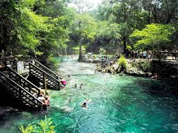 Florida wild swimming images Madison blue springs state park wild swimming news jpg