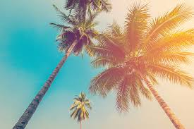 royalty free palm tree pictures images and stock photos istock