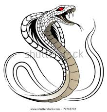 snake stock images royalty free images vectors
