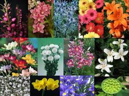 Wholesale Flowers Wholesale Bagala Bros Australia