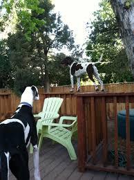 black dog pet services in denver colorado in home pet vacations