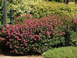 Decorative Trees In India Plants For East Texas East Texas Gardening