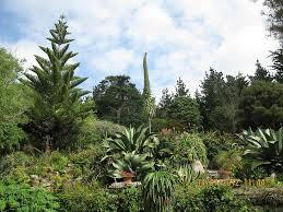 beautiful plants file tresco abbey garden beautiful plants png wikimedia commons