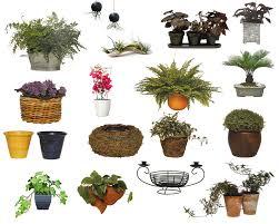 plants flowers plant vs pot size