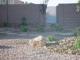 desert landscape with succulents cacti landscapes las vegas