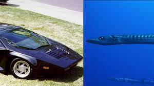 cars that look like lamborghinis ten cars that look like fish faiz rahman