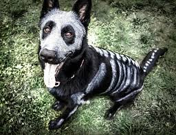 White Dog Halloween Costume Pet Owners Face Paint Turn Animals Creepy