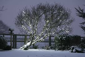 String Christmas Tree Lights by Christmas Tree Light Ideas Christmas Light Ideas Inspiration