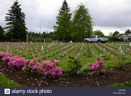 Memorial Garden Flags Memorial Day Flags At Willamette National Cemetery Portland