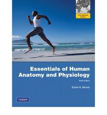 Essentials Of Human Anatomy And Physiology Notes Pearson Essentials Of Human Anatomy And Physiology 10th Edition At