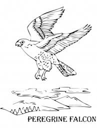 bird coloring pages peregrine falcon animal coloring pages of