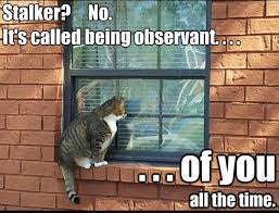 Memes About Stalkers - 18 stalking meme that will not creep you out sayingimages com