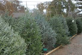 time to think selection care of christmas trees