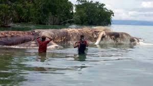 scientists have identified the 50 foot creature that washed up on