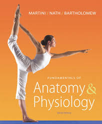 Human Anatomy And Physiology Study Guide Pdf Martini Nath U0026 Bartholomew Fundamentals Of Anatomy U0026 Physiology