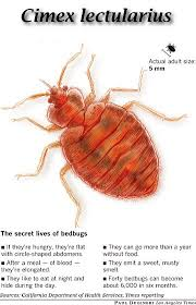 Can Bed Bugs Live In Water Bedbugs And Their Proper Control United Exterminating Company