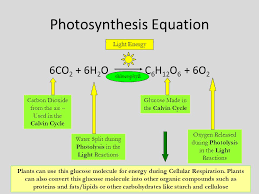 The Light Reactions Of Photosynthesis Use And Produce Unit 6 Photosynthesis U0026 Cellular Respiration Ppt Online