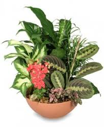 Flower Shops In Springfield Missouri - plants from flowerama 142 your local mo florist and flower sho