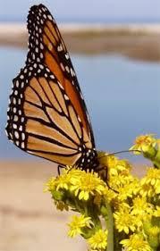 mariposa children s songs spain s