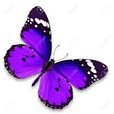 purple butterfly stock photos royalty free business images