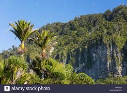 Park West Landscape by Punakaiki Paparoa National Park West Coast New Zealand Wooded