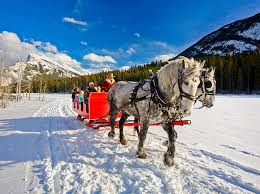 banff adventures winter sleigh ride tours in banff