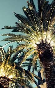 best 25 tropical christmas trees ideas on pinterest beach